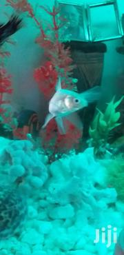 Aquariums Available | Pet's Accessories for sale in Dar es Salaam, Kinondoni