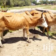 Ng'ombe Anauzwa   Livestock & Poultry for sale in Mwanza, Nyamagana